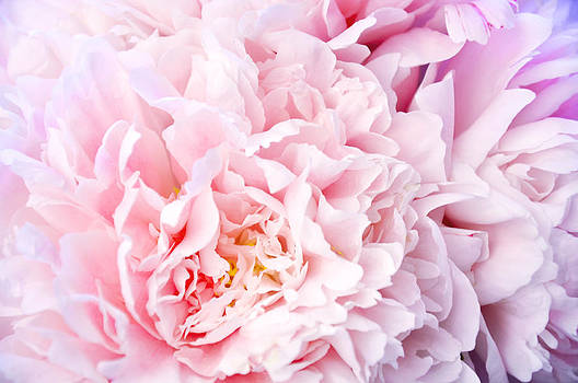 A happy life - Peonies 3 by Risa L