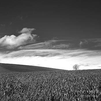 BERNARD JAUBERT - Agricultural landscape