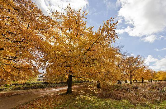 Autumn Leaves by Maj Seda
