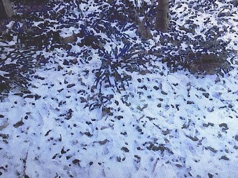 Backyard Snow Study by Philip White