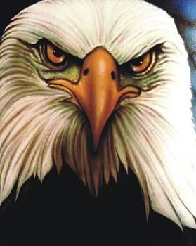 Bald Eagle by Christopher Fresquez
