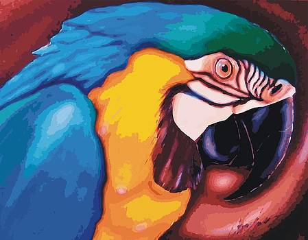 Blue Macaw by Christopher Fresquez