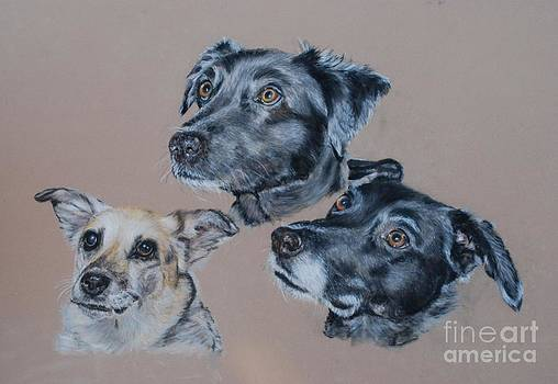 3 Dogs by Tanya Patey