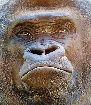 Paulette Thomas - Gorilla