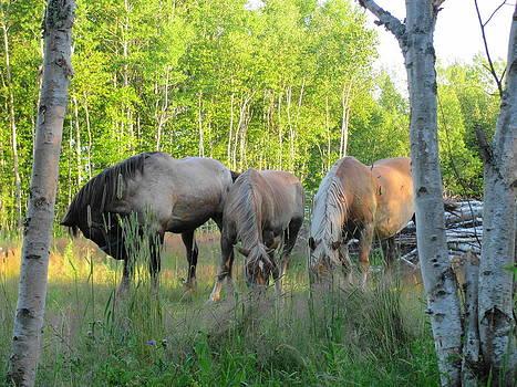 3 Horses by Sandra Martin