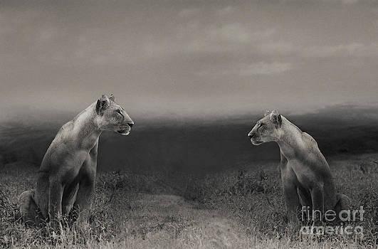 Lions by Christine Sponchia