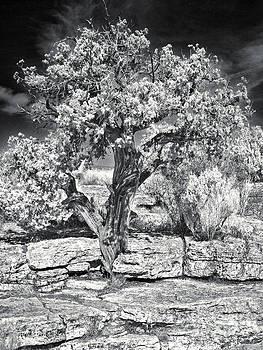 Gregory Dyer - Montezumas Well