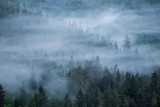 Morning Fog Rises Off Of A Spruce by Erika Skogg