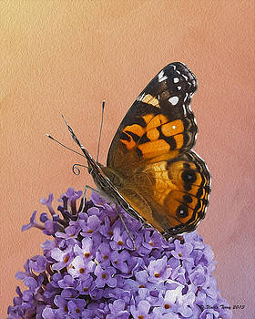 Painted Lady by Terry Jacumin