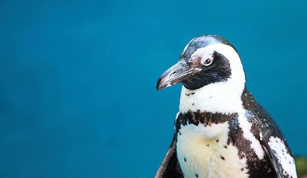 Penguin by Tinjoe Mbugus