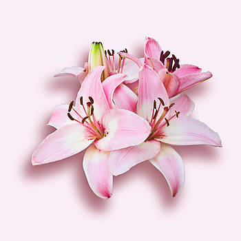 Jane McIlroy - Spray of Pink Lilies