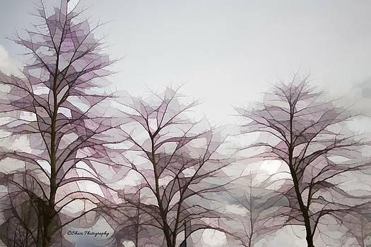 3 Trees by Shari Whittaker