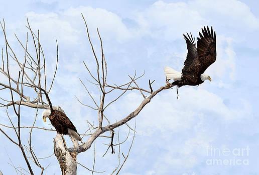 Bald Eagles by Lori Tordsen