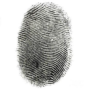Photo Researchers Inc - Fingerprint