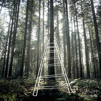 BERNARD JAUBERT - Forest