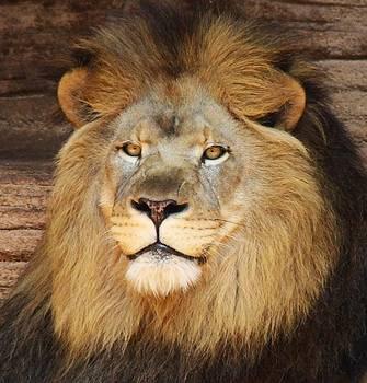Paulette Thomas - King Of The Jungle