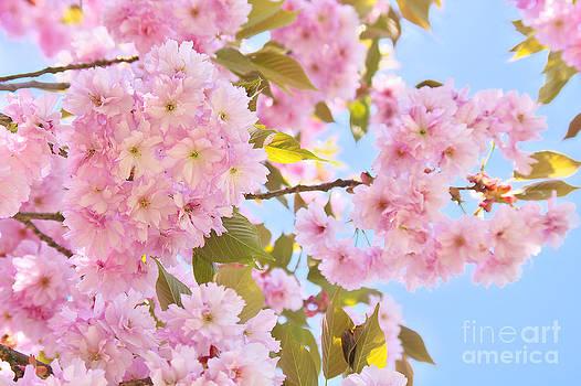 Angela Doelling AD DESIGN Photo and PhotoArt - Springtime