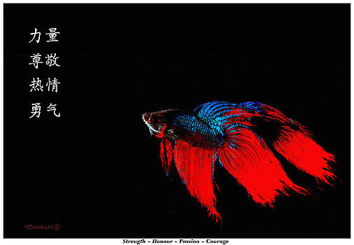 4 Virtues Siamese Fighting Fish #3 by Richard De Wolfe