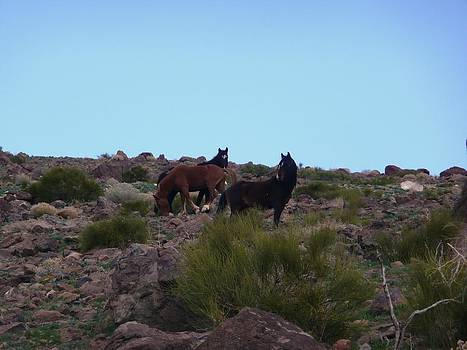 Wild Horses by Amy Ernst