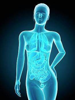 Human Anatomy by Sebastian Kaulitzki