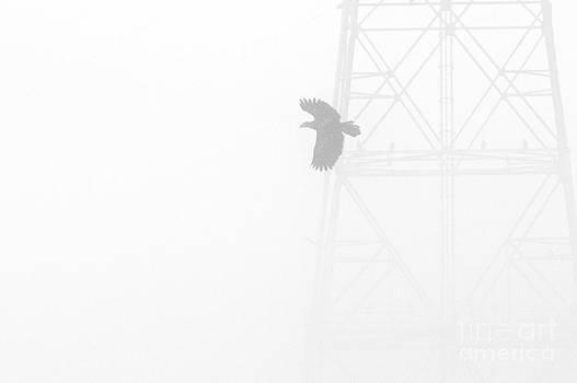 5 Bald Eagles by Paul Frederiksen