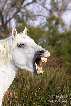 M Watson - Camargue Horse