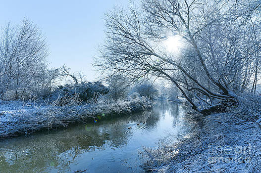 Svetlana Sewell - Winter