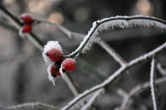 Winter by Alda Villiljos