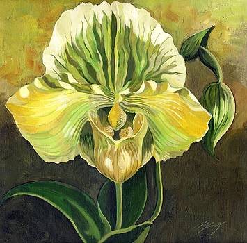 Alfred Ng - ladyslipper orchid
