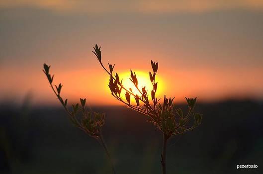 Sunset by Paulo Zerbato