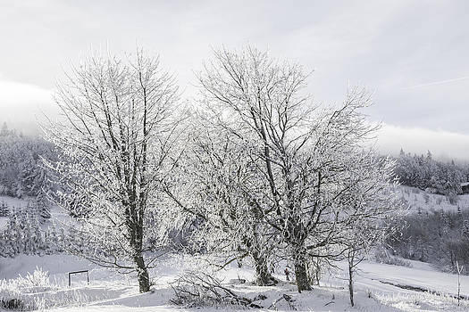 Winter landscape by Patrick Kessler