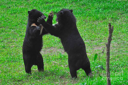 Mark Newman - Asian Black Bear