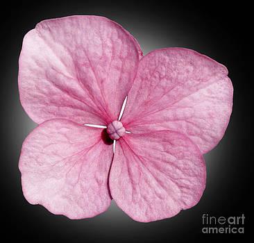 Flowers by Tony Cordoza