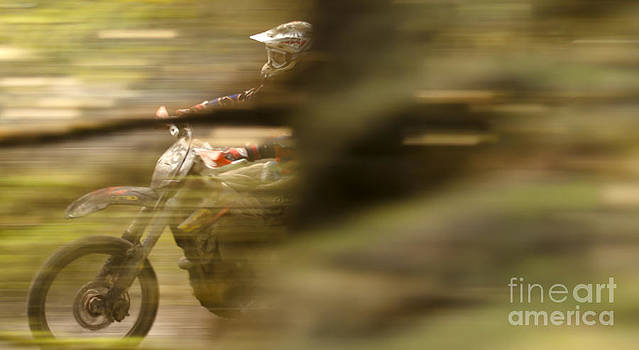 Angel  Tarantella - through the woods