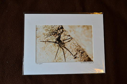 9x12 Matted - Fishing Spider by Becky Anders