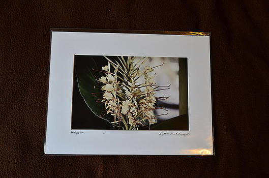 9x12 Matted - Hedychium by Becky Anders