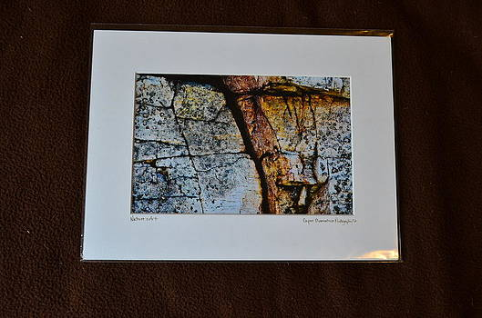 9x12 Matted - Natures Art by Becky Anders