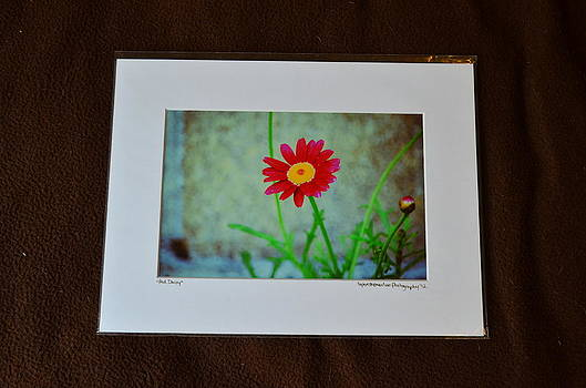 9x12 Matted - Red Daisy by Becky Anders