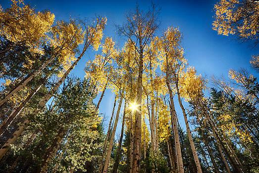 Saija  Lehtonen - A Beautiful Fall Morning