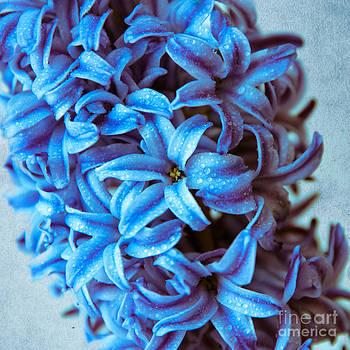 Hannes Cmarits - a beauty in blue