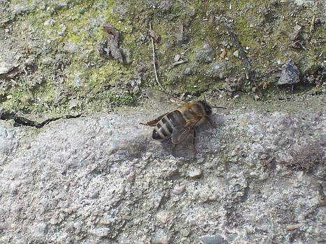 A bee on the concrete by Galina Todorova