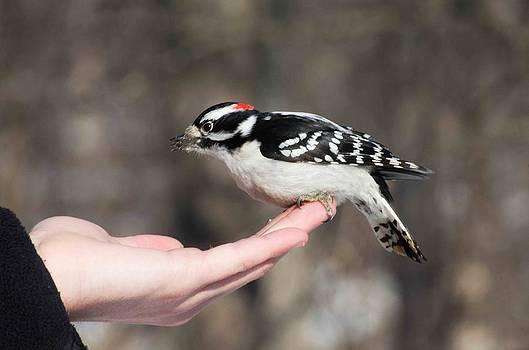 A Bird In The Hand by Cheryl Cencich