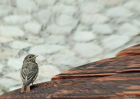 A bird by Marija Djedovic