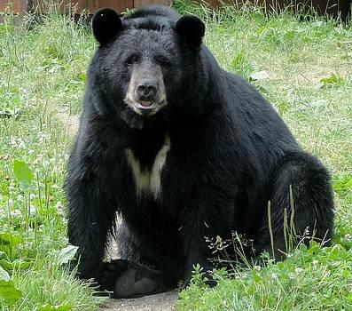 A Black Bear Named Vince by Jody Benolken