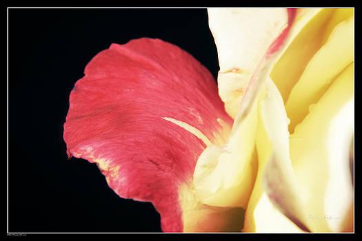 Mick Anderson - A Bleeding Rose