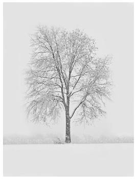 A Blizzard Moment by Nancy Edwards
