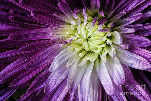 A Bloom's Unfolding by Madonna Martin