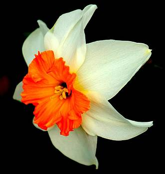 Rosanne Jordan - A Burst of Springtime Glory