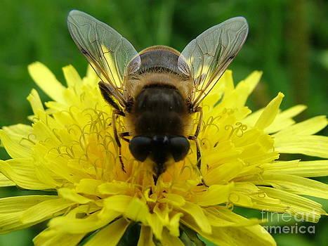 Joe Cashin - A busy bee