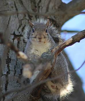 A Charming Gray Squirrel by Wendy  Beatty